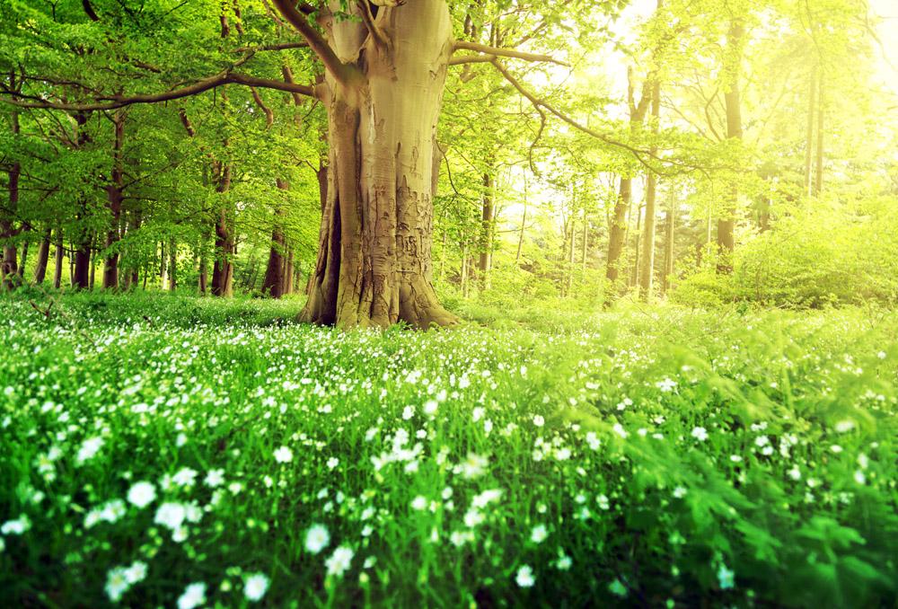 绿色草地花朵与树林图片