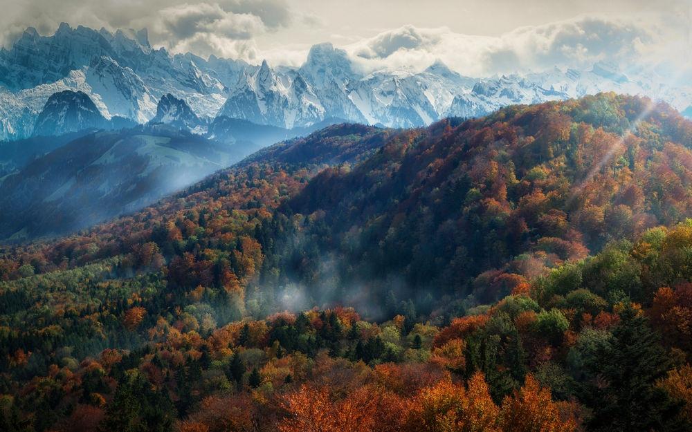 景观,山,森林,秋季,薄雾,树木,阿尔卑斯山,雪峰,云,太阳光线,早上